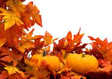Fall Harvest Border Royalty Free Stock Photo