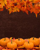 Fall Harvest Border Royalty Free Stock Image