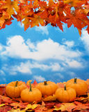 Fall Harvest Border Royalty Free Stock Photography
