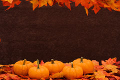 Fall Harvest Border Stock Photo