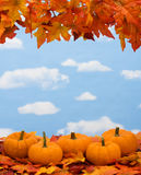 Fall Harvest Border Royalty Free Stock Images