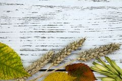 Fall harvest close up colorful frame or banner. Thanksgiving or autumn background with place or spase for text Royalty Free Stock Photography