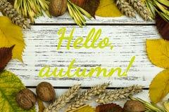 Fall harvest close up colorful frame or banner stock illustration