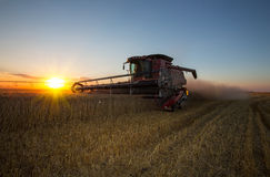 Fall harvest. Combine Harvesting spring wheat at sunset Royalty Free Stock Photos