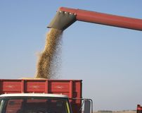 Fall Harvest: Combining Soybeans Royalty Free Stock Photos