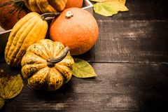 Fall harvest cornucopia and Thanksgiving day. Fall harvest cornucopia. Autumn season with fruit and vegetable. Thanksgiving day with Copy space for text royalty free stock images