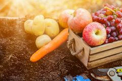 Fall harvest cornucopia royalty free stock images