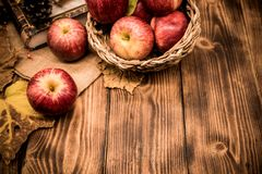 Fall harvest cornucopia. Picking up red apples in the garden. stock photo