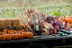 Fall harvest for decorating Stock Photography