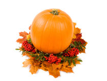 Fall harvest decoration Stock Images