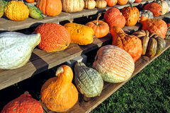 Fall Harvest Decorative Vegetables on Farm Stand stock image