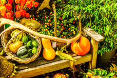 Fall Harvest display in a historic village in the Nethrlands. Fall Harvest still life display on a sunny day in a historic village in the Netherlands Stock Photo