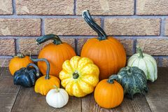 Fall harvest display of varied pumpkins and gourds on rustic woo. D surface, brick wall background. Autumn, Thanksgiving, Halloween or harvest image Royalty Free Stock Photo