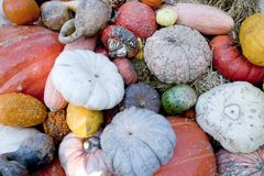 Fall harvest of Gourds & Pumpkins royalty free stock image
