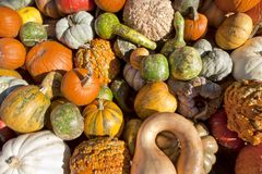 Fall harvest of Gourds & Pumpkins stock image