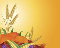 Fall Harvest Illustration. Fall Harvest with Wheat Grain Pumpkins Corns Grapes and Leaves Illustration Royalty Free Stock Photos