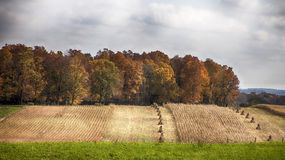 Fall harvest landscape. Autumn landscape in Kidron, Ohio, showing corn harvest being placed in shocks Royalty Free Stock Images
