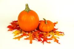 Fall Harvest and mini pumkins