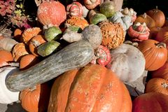 Fall harvest of Gourds & Pumpkins royalty free stock images