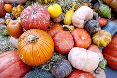 Fall harvest of Gourds & Pumpkins stock images
