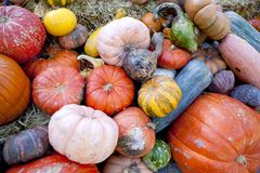 Fall harvest of Gourds & Pumpkins stock photos