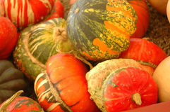 Fall harvest multicolored ornamental gourds Royalty Free Stock Photos