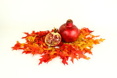 Fall Harvest of pomegranates Stock Images