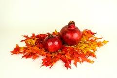 Fall Harvest of pomegranates Royalty Free Stock Photography