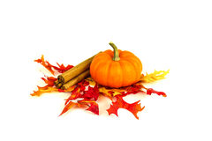 Fall Harvest and pumpkin spice Stock Images