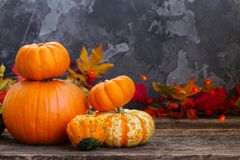 Fall harvest of pumpkins Stock Photography