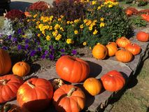 Fall Harvest Stock Image