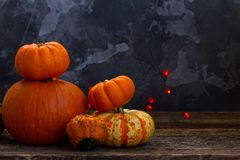 Fall harvest of pumpkins. On wooden table Royalty Free Stock Photography