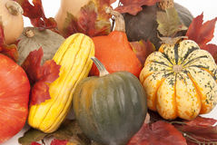 Fall harvest of squash with a white background Royalty Free Stock Images