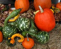 Fall Harvest V. Swan gourds and pumpkins on dispay at a Virginia farmer's market stock image