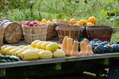 Fall harvest veggies Stock Images