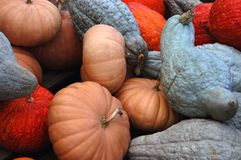 Fall Harvest VI Stock Photos