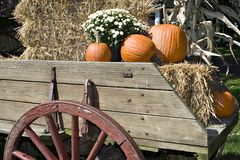 Fall Harvest in Wagon Royalty Free Stock Image