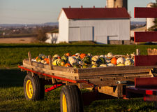 Fall harvest Stock Photos