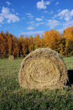 Fall Hay Bale. Hay field scene in autumn Stock Images