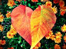 Fall heart. S and flowers Stock Photos