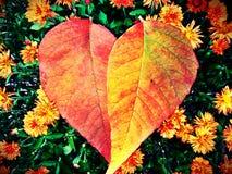Fall heart Stock Photos
