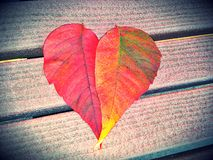 Fall heart leaves Stock Photos
