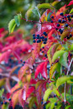 Fall hedge Stock Images