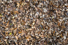 Fall-Herbst-Blatt-Hintergrund Lizenzfreies Stockfoto
