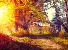 Fall Herbstlicher Park Stockfotos