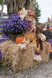 Fall is Here. An autumn scene with a scarecrow sitting next to fall mums on a hay bale. Also in the scene is a small pumpkin and Indian corn Stock Photos
