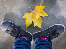 Fall is here Royalty Free Stock Image