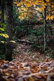 The fall is here. One of the trails in Rawdon, Quebec, Canada stock images