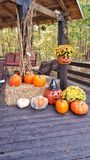 Fall is here. Pumkins dried corn stalks jack o lanterns,,flowers wooden deck outdoor scene holiday autumn Royalty Free Stock Photos