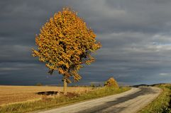 Fall highway. And mowed field Royalty Free Stock Photography
